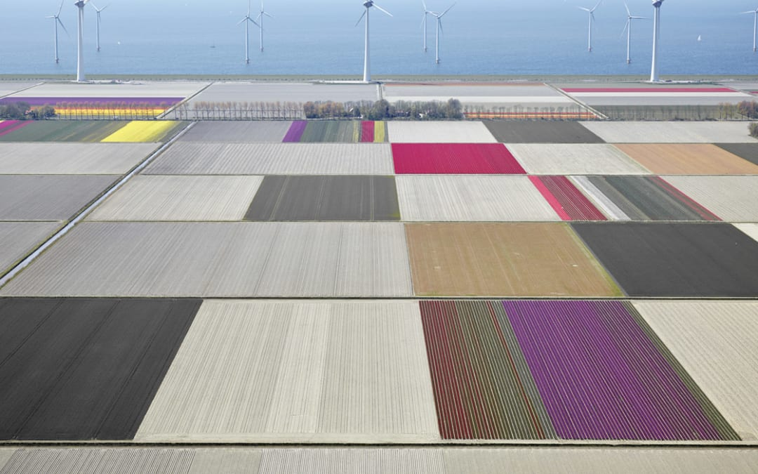 Tulips & Turbines 1, Flevoland, The Netherlands, 2016