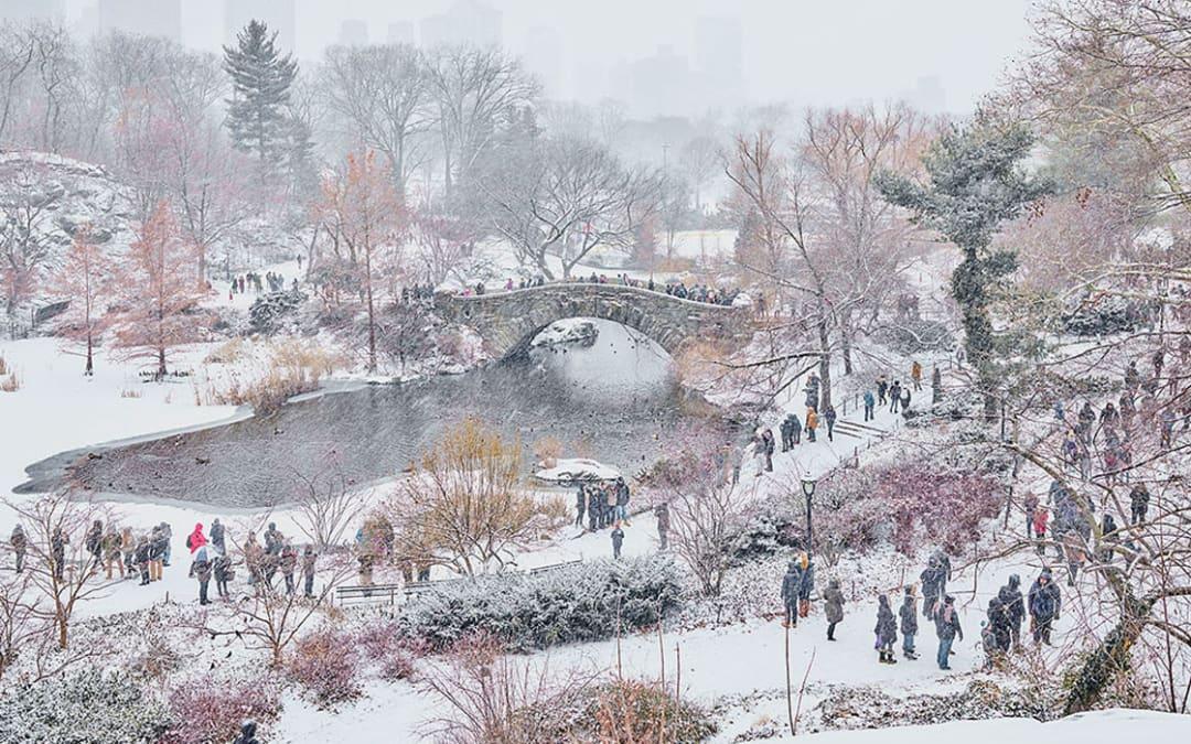 December Snow, Central Park, New York City, NY, 2017