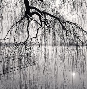 Lake Tree, Beihai Park, Beijing, China