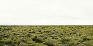 Moss Covered Lavafield, Iceland, 2008