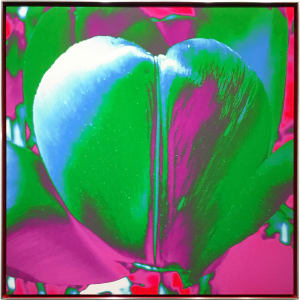 Tulip As My Heart In The Universe (Green), 2019