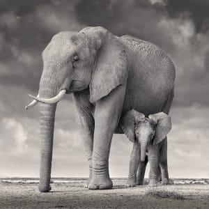 Elephant Mother and Calf, Amboseli, 2020