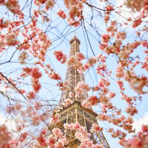 Cherry Blossoms, Champ de Mars, Paris, France, 2017