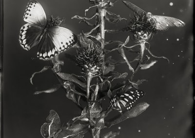 Death of the Moth, 2014
