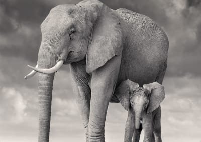 Elephant Mother and Calf, Amboseli, 2020