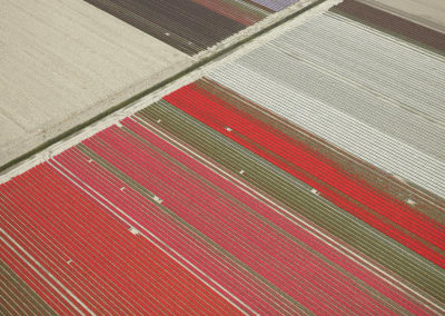 Veld 23, Noordoostpolder, Flevoland, The Netherlands, 2016