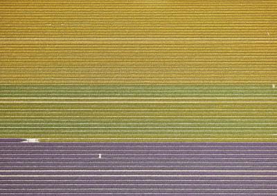 Veld 10, Noordoostpolder, Flevoland, The Netherlands, 2016