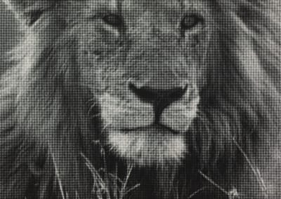 William Betts – Lion 1
