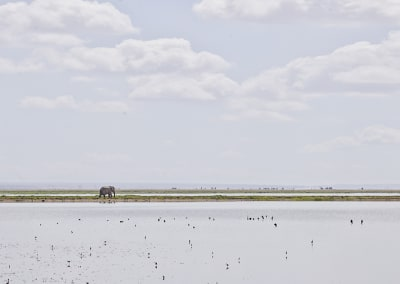 Elephant on the Horizon, Amboseli, Kenya