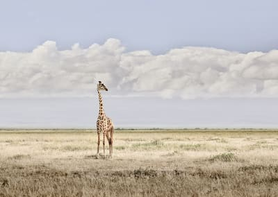 Head in the Clouds, Amboseli, Kenya