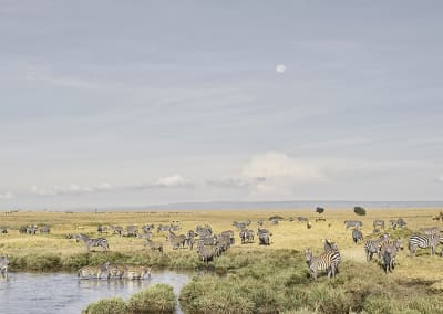 Zebras at Watering Hole, Maasai Mara, Kenya, 2019