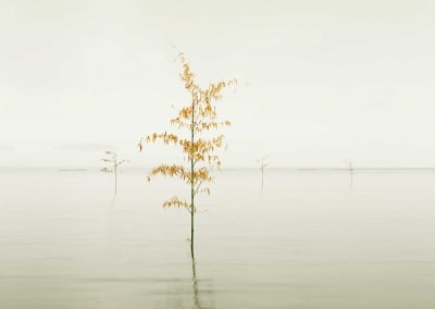 Orange Leaves, Ariake Sea, Japan, 2010