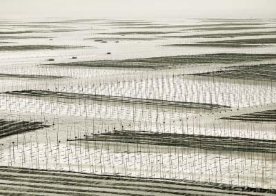 Mesh, South China Sea, 2011