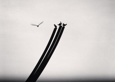 Four Birds, St. Nazaire, France