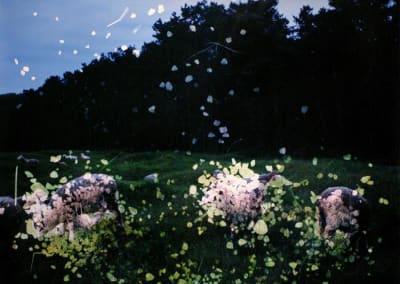 Vimy Ridge with Field,  Rocks, and  Sheep, 2015, edition 1/1