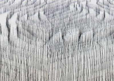Bamboo 1, Fujan, China, 2017