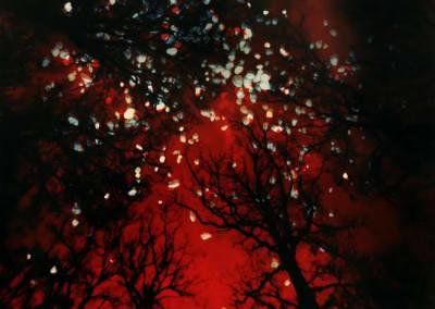 Flanders Cemetery Trees, Red Sky, Stones, 2016