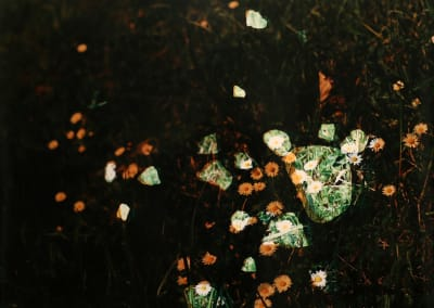 Daisies In WWI Trench 2, 2014, edition 1/1