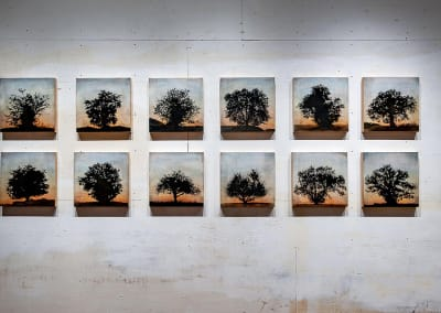 Tree grid, 12 panels (Complete series) - Stephen Hutchings