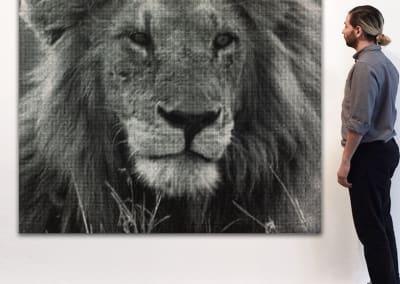Lion_1_72x72 William Betts at Kostuik Gallery