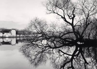Reflected Tree, Hongkun, Anhui, China