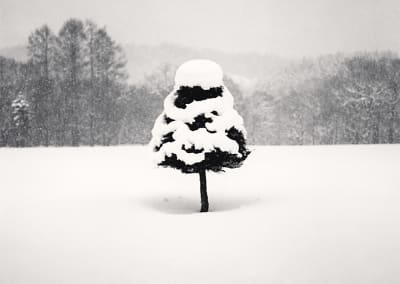Michael Kenna- Snow Parfait Tree, Wakoto, Hokkaido, Japan