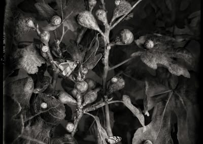 Figs, 2021