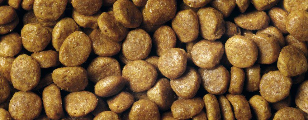 Сухой корм Purina Pro Plan для взрослых кошек от 1 года, со вкусом лосося, 10кг