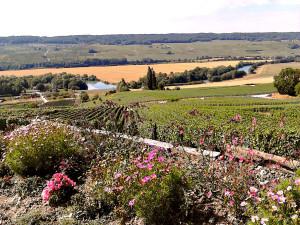 Varen in Frankrijk op de Champagne route