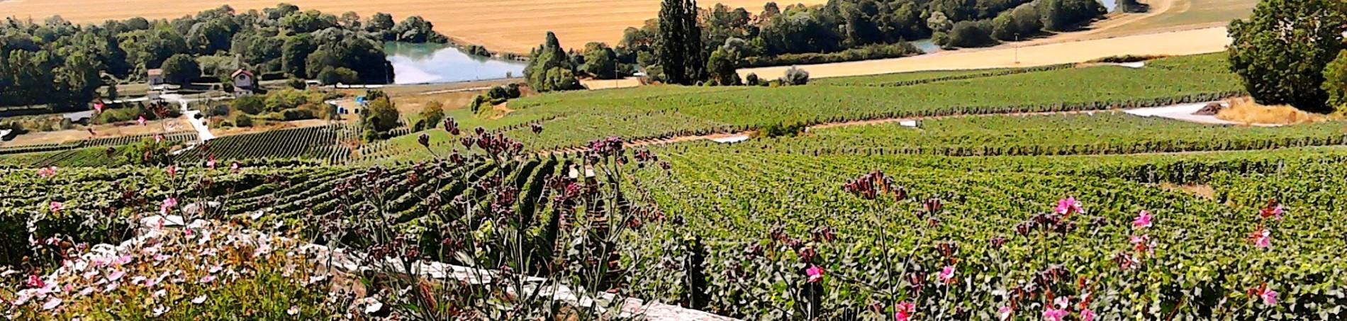 Zicht op de Marne vanuit Chatillon-sur-Marne