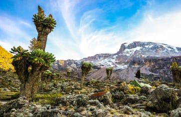 Kilimanjaro, Kenia