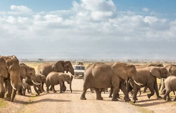 Safari, Tansania/Sansibar