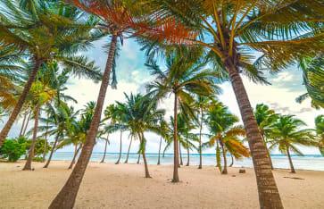 Bois Jolan beach, Guadeloupe