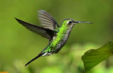 Naturerlebnisse, Jamaika, Karibik