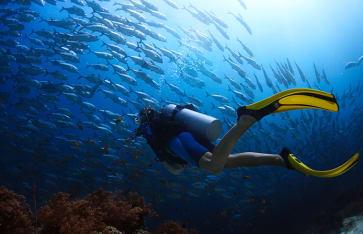 Taucher, die in einem tropischen Meer auf die Schule von Jack Fisch kommen