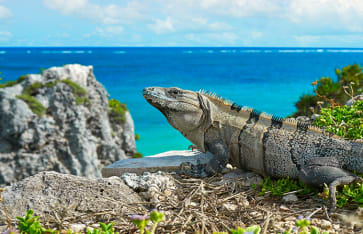 Guadeloupe, Karibik