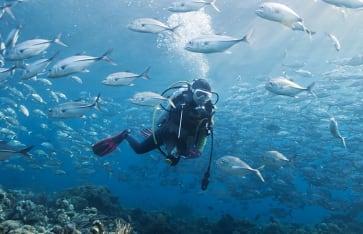 Tauchen, Seychellen