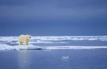 Polarbär, Svalbard Archipelago, Arktis