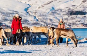 Rentier Reisen, Lappland