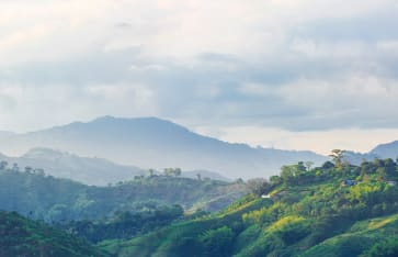 Kaffeeanbaugebiet, Kolumbien