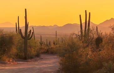 Sonnenuntergang in der Wüste von Mexico