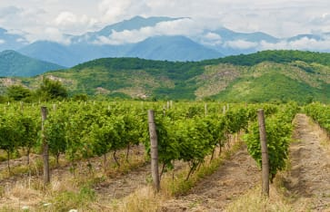 Weinregion Kakheti, Georgien