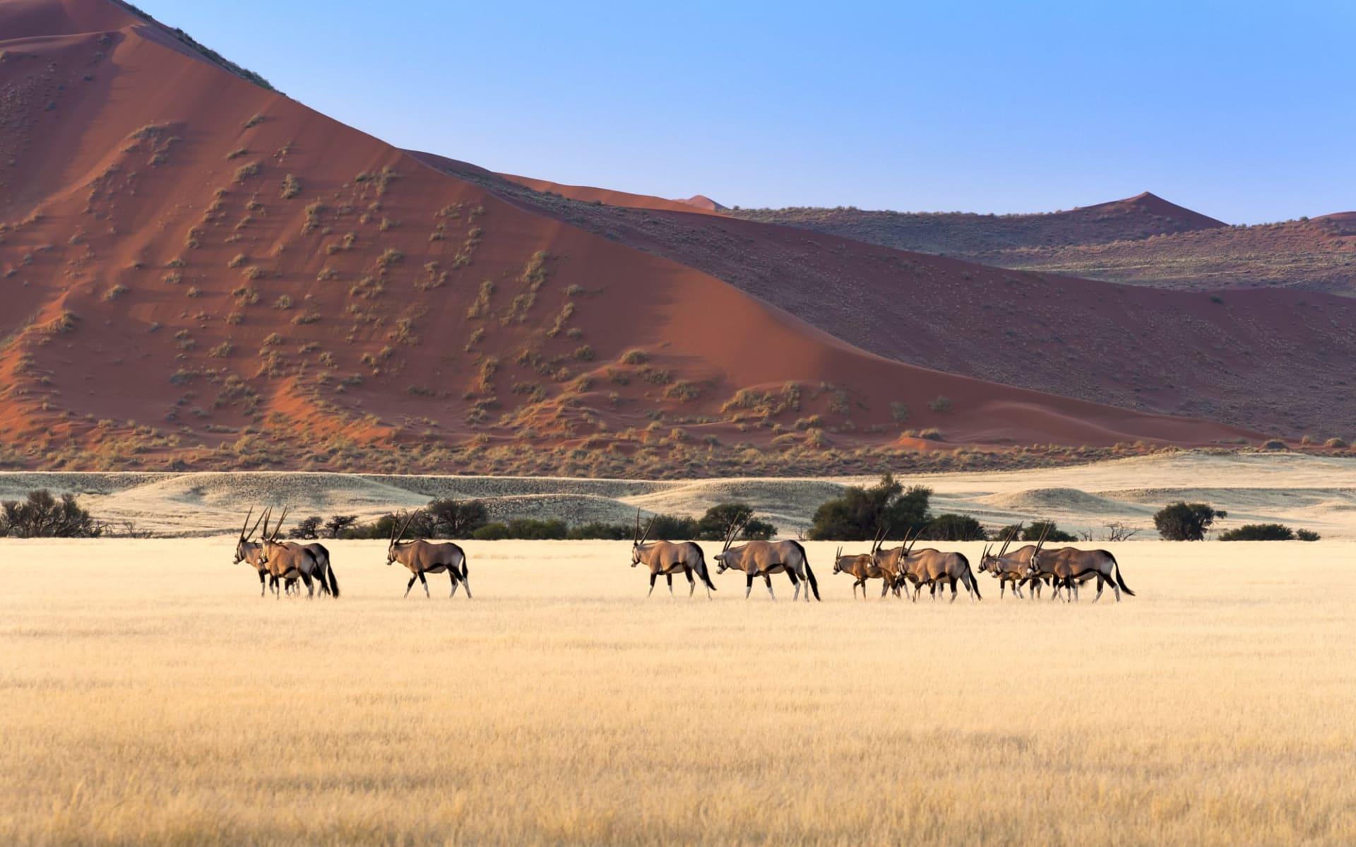 Von Windhoek nach Kapstadt ab Windhoek Stadt: