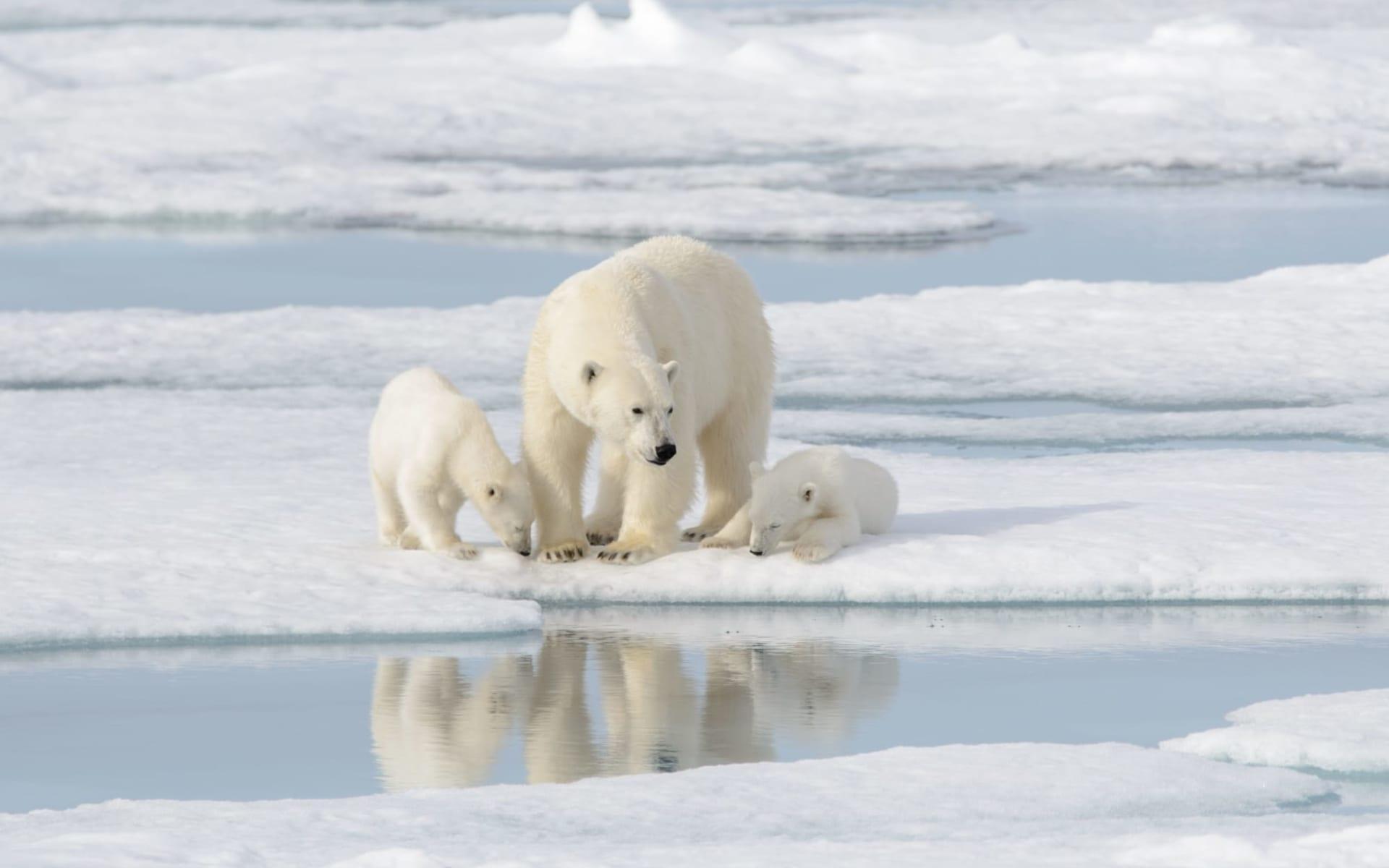 Eisbären-Abenteuer Hudson Bay im Winter ab Winnipeg: