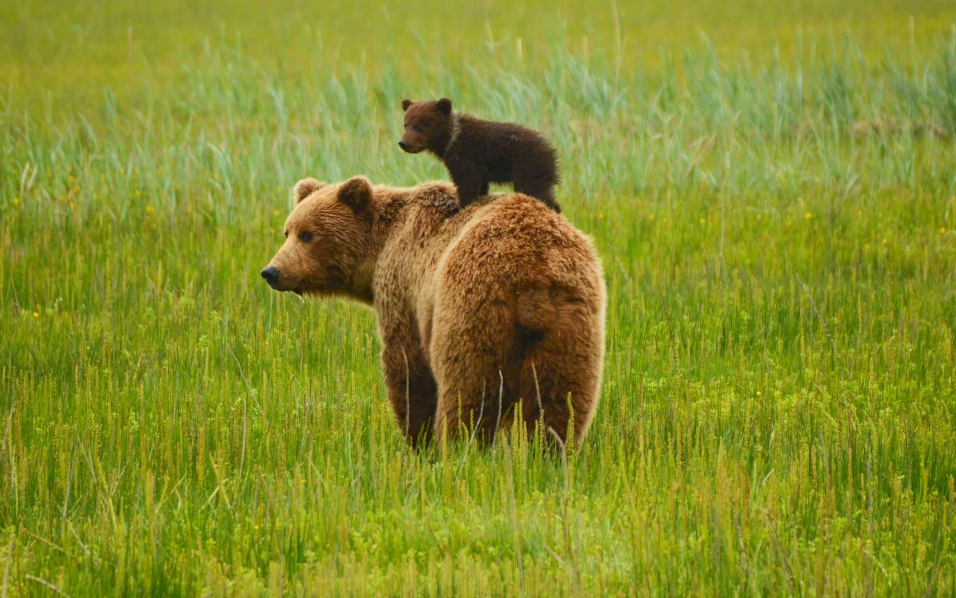 Okwari Tierbeobachtung ab La Baie: