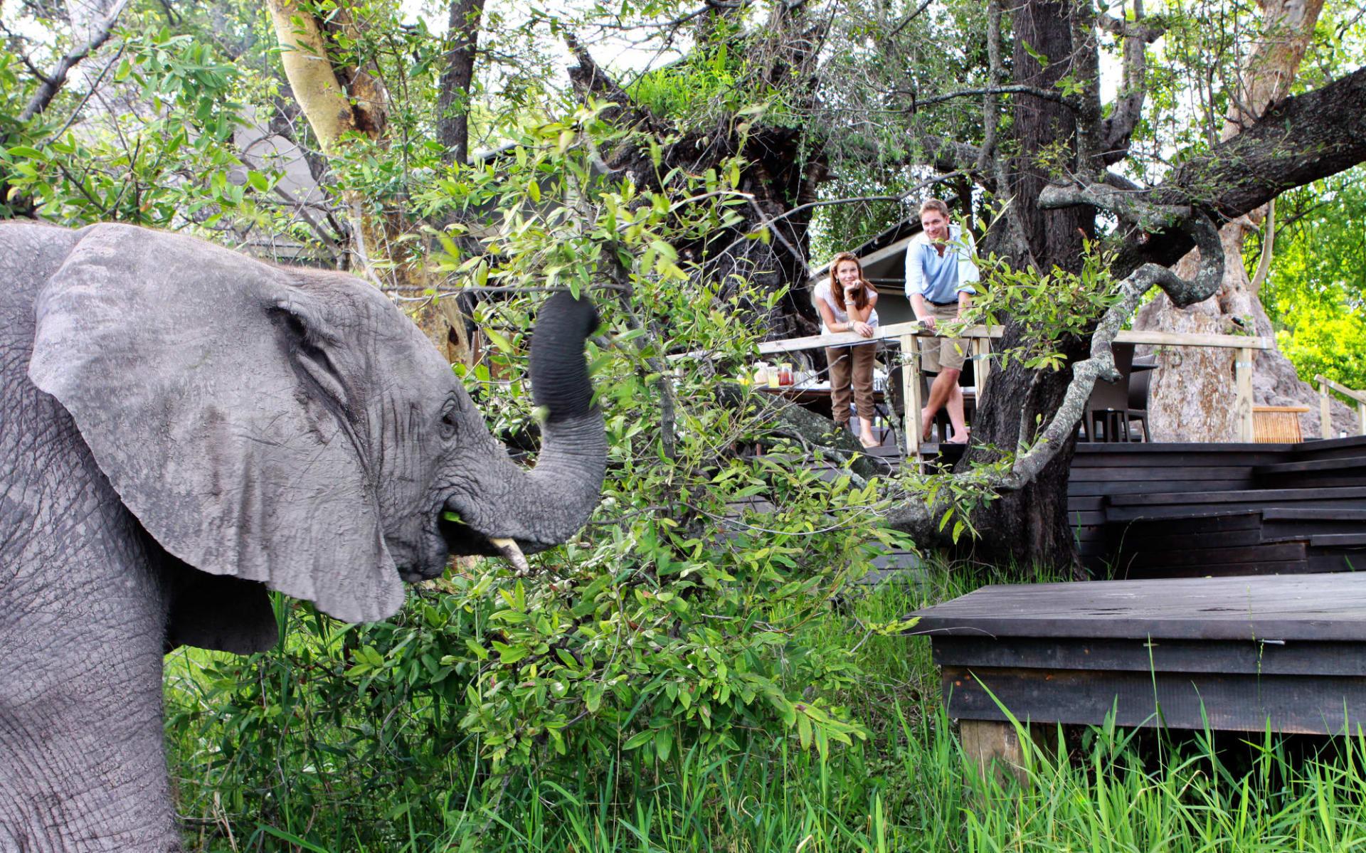 Abu Camp in Okavango Delta:  Abu Camp