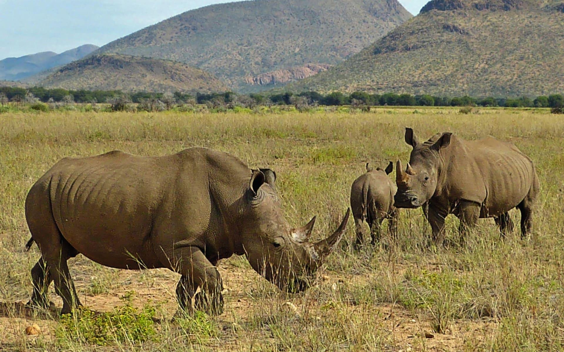 GocheGanas Nature Reserve & Wellness Village in Windhoek Region:  GocheGanas Nature Reserve & Wellness Village - Nashornfamilie