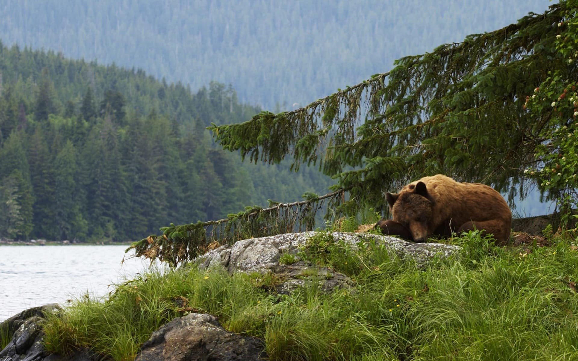 Bärenbeobachtung Knight Inlet Lodge 3 Tage ab Campbell River: activities: Knight Inlet Lodge - Bärenbeobachtung