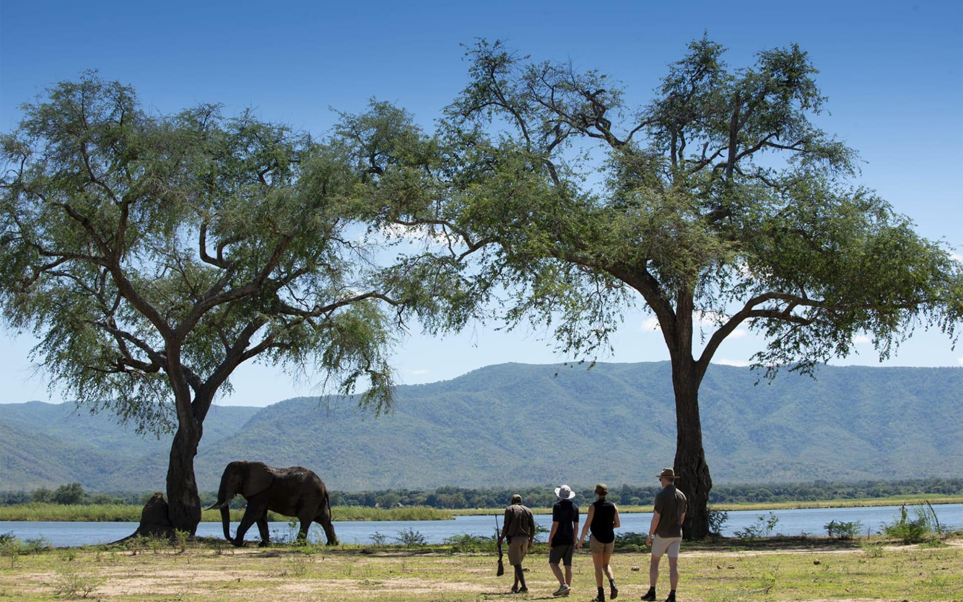 Nyamatusi Camp in Mana Pools Nationalpark:  nyamatusi_047