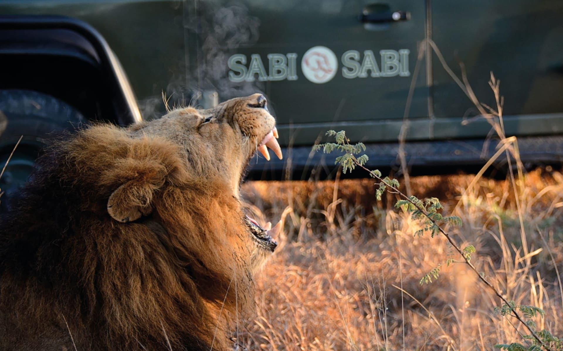 South Africa's Secrets ab Kapstadt: activities: Sabi Sabi - Safarifahrzeug und bruellender Loewe